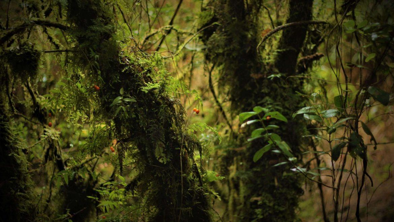 Tree Lodge Reservar