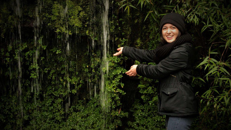 bosque puqueldon