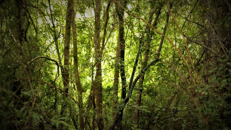 bosque tree lodge
